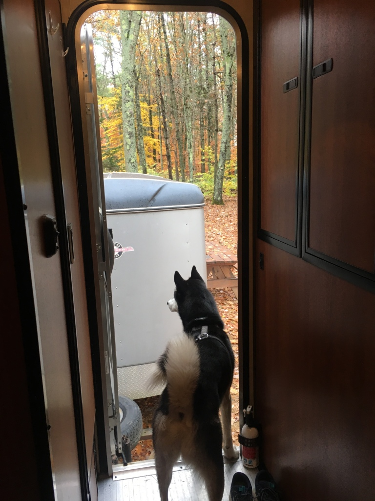 A husky peers out the open door of the camper at fall foliage